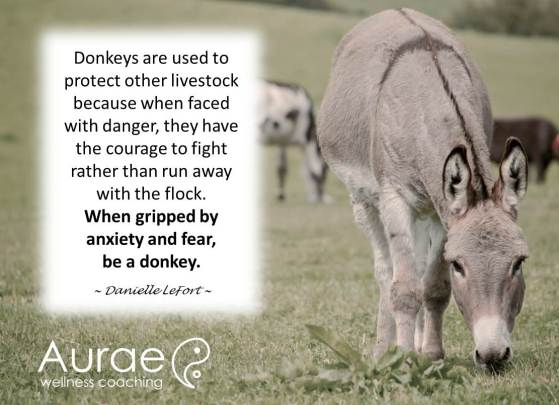 Fight like a Donkey