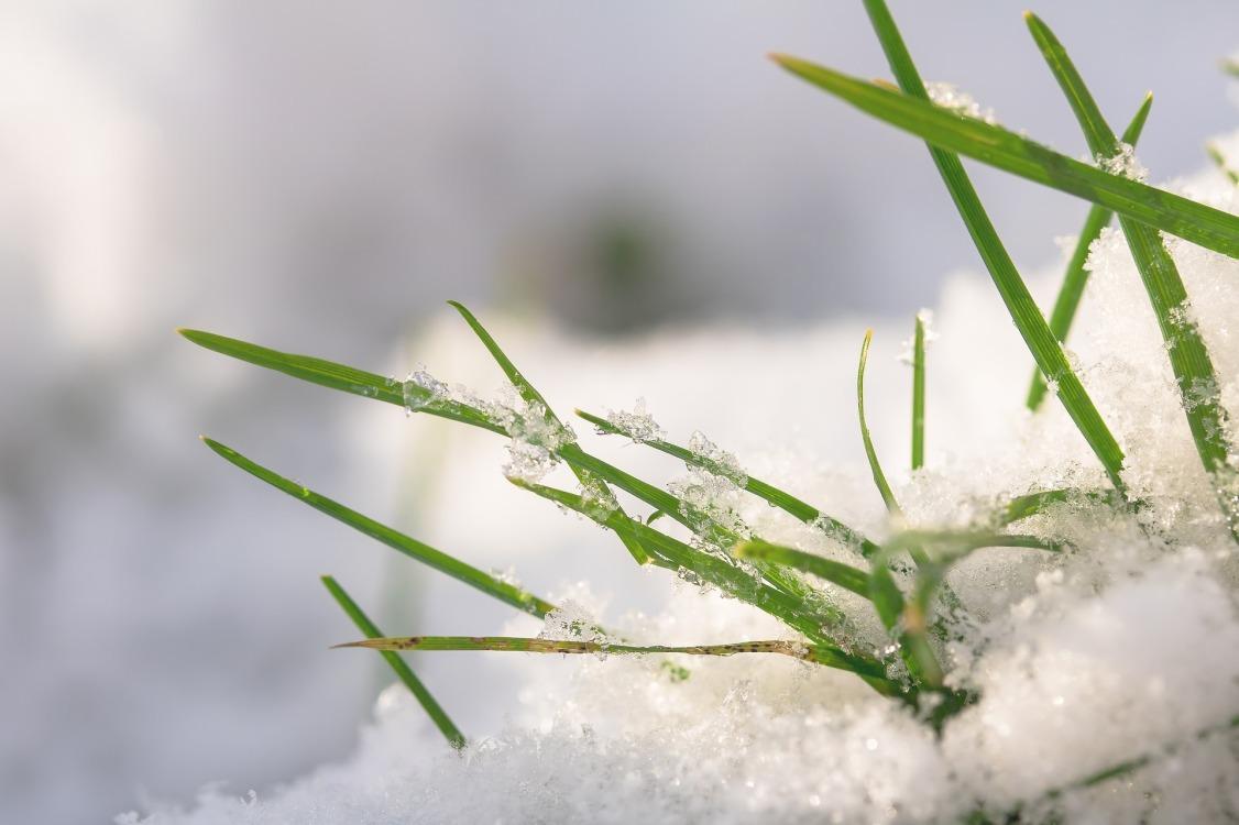 grasses-2990666_1920