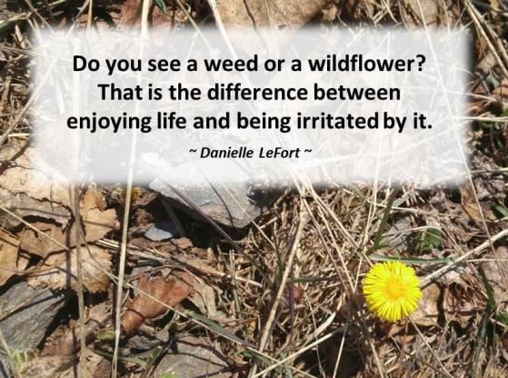 Perspective - weeds or wildflowers